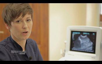 Przygotowanie pacjenta do USG i terminologia