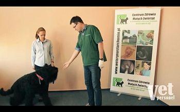 Jak bezstresowo zbadać psa