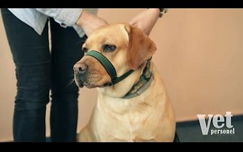 Jak zabezpieczyć agresywnego psa